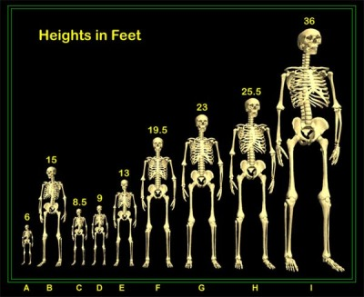 Nephilim Height chart thctalk com
