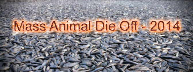 Mass Animal Deaths World-Wide – Cause for Alarm!