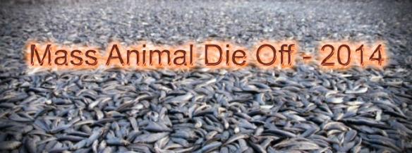 mass animal die offs 2014 copy