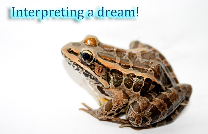 frog dream interpretation copy